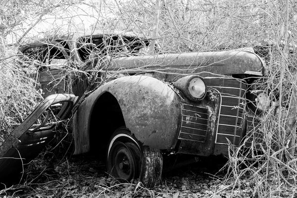 Black and white photograph of a large beautiful antique automobile rusting away in the countryside even as it's being consumed by vines and branches.