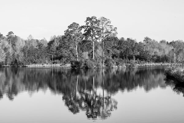 Black and white landscape photograph of trees reflecting in a placid pond just after sunrise in the American South.