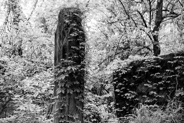 Black and white photograph of the ruined remains of a long-abandoned highway bridge becoming overgrown in the woods.
