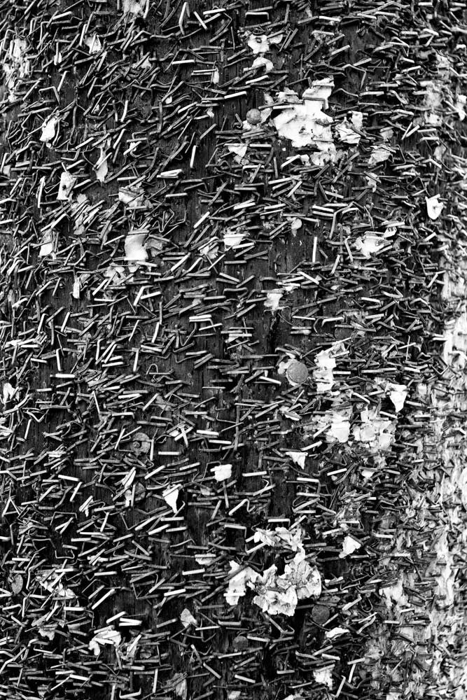 Black and white abstract photograph of a telephone pole covered in staples on Frenchman Street in New Orleans.