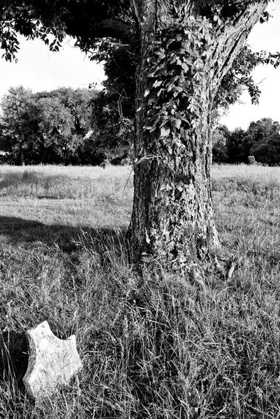Black and white landscape photograph of a cemetery tree covered in ivy, with a broken gravestone on the historic McFadden farm. The tree sits in the middle of a Civil War battlefield site.