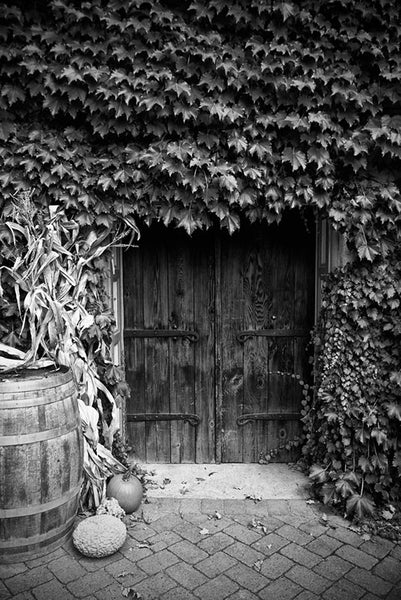 Black and white photograph of big wooden doors that lead to the cellar of a winery, surrounded by a wall-covering of ivy.