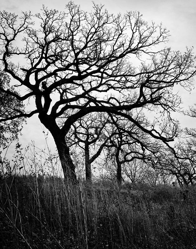 Dramatic black and white landscape photograph of barren winter trees on a hillside, with a stormy sky behind.