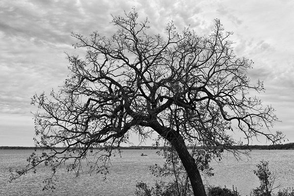 Black and white landscape photograph of a beautiful leaning tree, with its curved branches framing two distant fishermen standing on a boat on the lake.