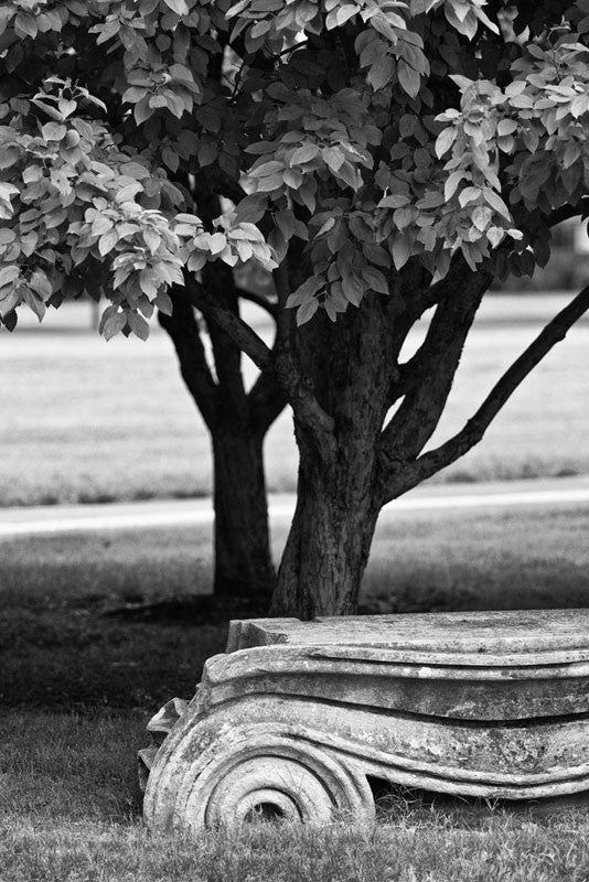 "Black and white photograph of an antique Ionic column fragment laying in the grass in Nashville. Originally part of the Tennessee State Capitol building, these columns were removed during a renovation and have been scattered around Nashville as a reminder of its reputation as ""the Athens of the South."""