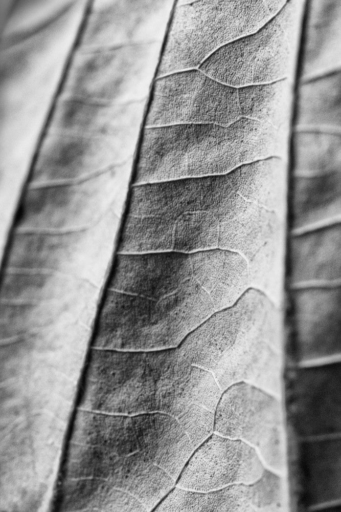 An abstracted close-up detail photograph of a fallen leaf.