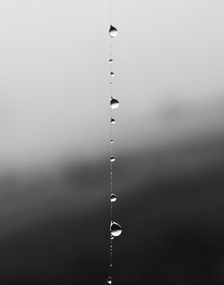 Black and white photograph of dew drops running down a single strand of spider web.