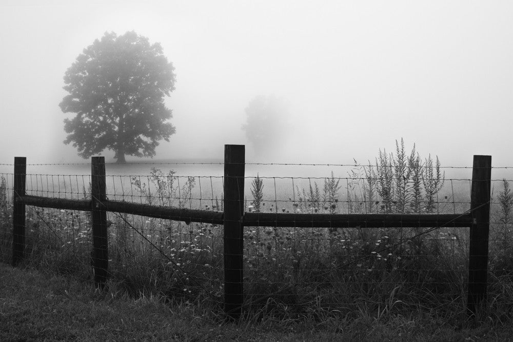 Black and white landscape photograph of a rural fenceline and trees fading into a dense morning fog.