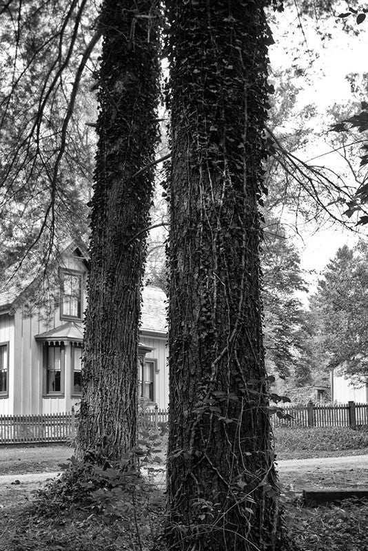 Black and white landscape photograph of two tall trees in Rugby, Tennessee, which was founded in East Tennessee in the 1800s by English immigrants. The town features numerous historic English-style houses and other structures.