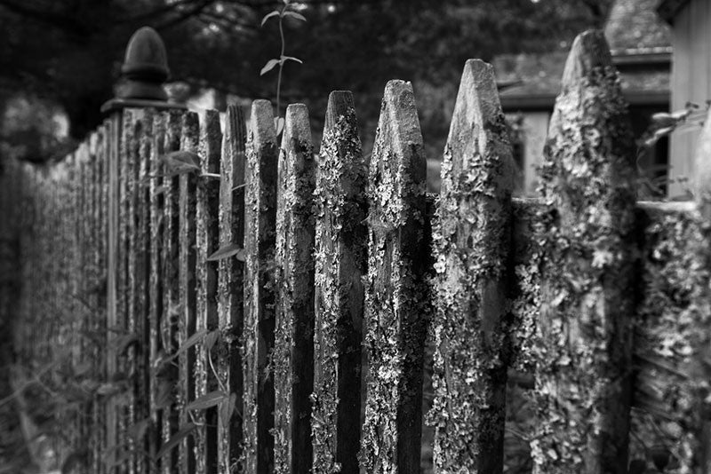 Black and white landscape photograph of a mouldering picket fence in leafy Rugby, Tennessee, which was founded in East Tennessee in the 1800s by English immigrants. The town features numerous historic English-style houses and other structures.