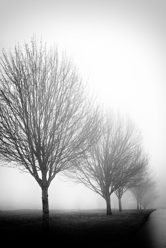 Black and white photograph of trees fading into a fog.
