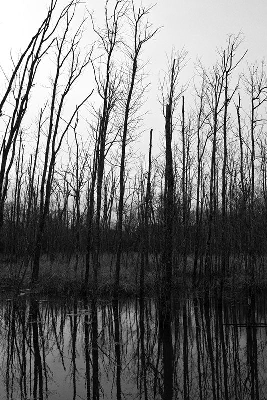 Dark and gloomy black and white winter landscape photograph of barren trees growing along the edge of a pond.
