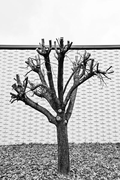Black and white photograph of a pruned tree in front of a vintage building with a unique wall pattern in Nashville, Tennessee.