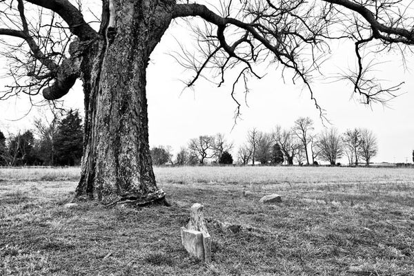 Black and white landscape photograph of a big old cemetery tree covered arching over a broken gravestone on the historic McFadden farm.