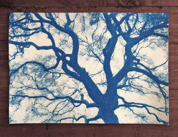 This is a unique one-of-a-kind handmade cyanotype print of the spread branches of a beautiful big tree, printed on textured ivory watercolor paper, handmade and printed by the artist.