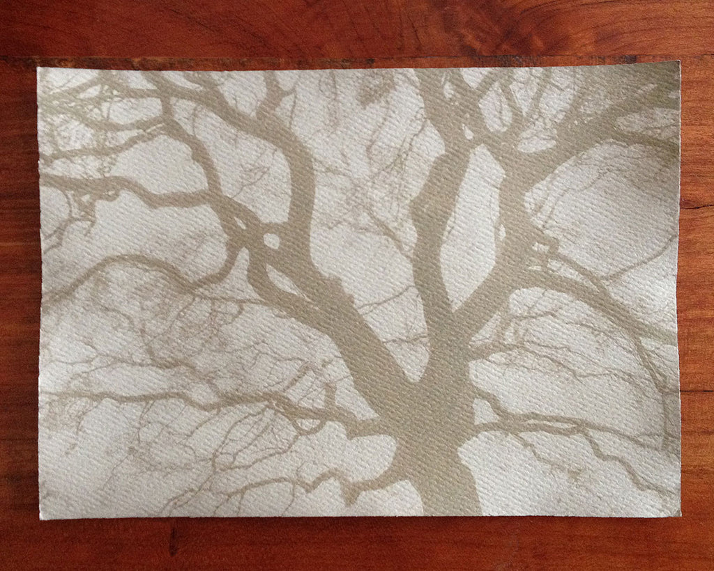 This is a unique one-of-a-kind handmade tea-toned cyanotype print of the spread branches of a beautiful big tree, printed on textured ivory watercolor paper, handmade and printed by the artist.