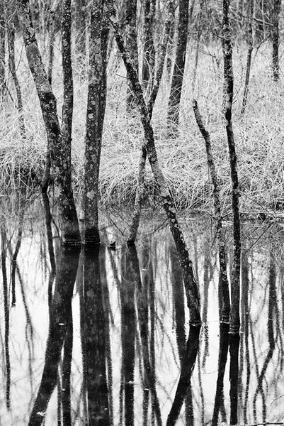 Black and white landscape photograph of barren trees reflecting in a wetland in winter.