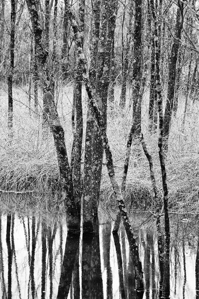 Winter Trees Reflecting in Water Landscape Photograph (IMG_9184)