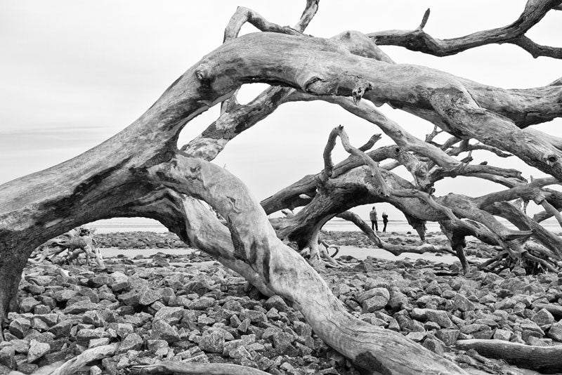 Black and white photograph of a couple walking among the skeletons of trees on Driftwood Beach on Jekyll Island, Georgia.