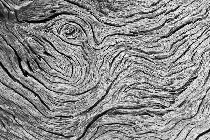 Black and white photograph of rhythmic patterns in a piece of weathered driftwood on Jekyll Island, Georgia.