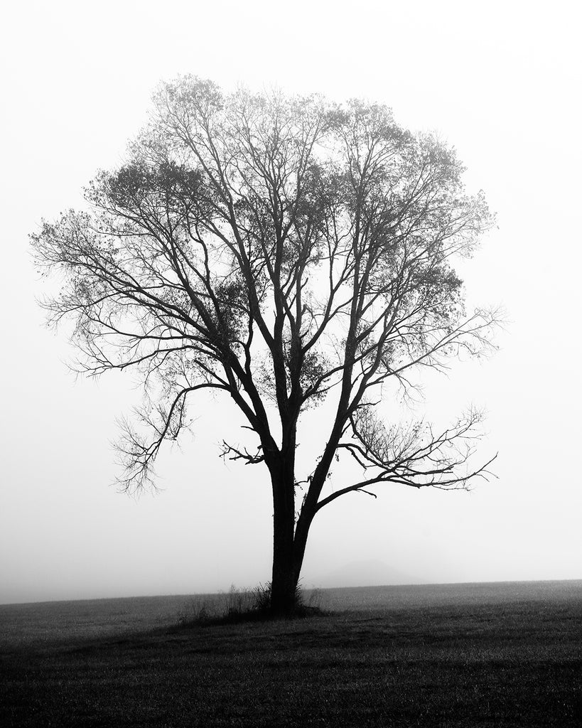 Black and white landscape photograph of a lone tree in an open pasture cloaked my a dense morning fog.