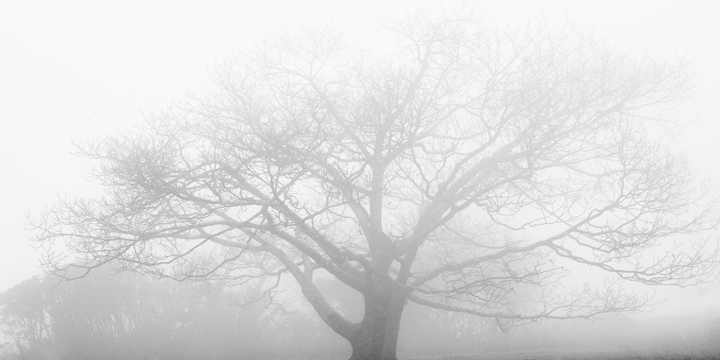 Black and white landscape photograph of a beautifully barren outstretched tree veiled in dense mountain fog.