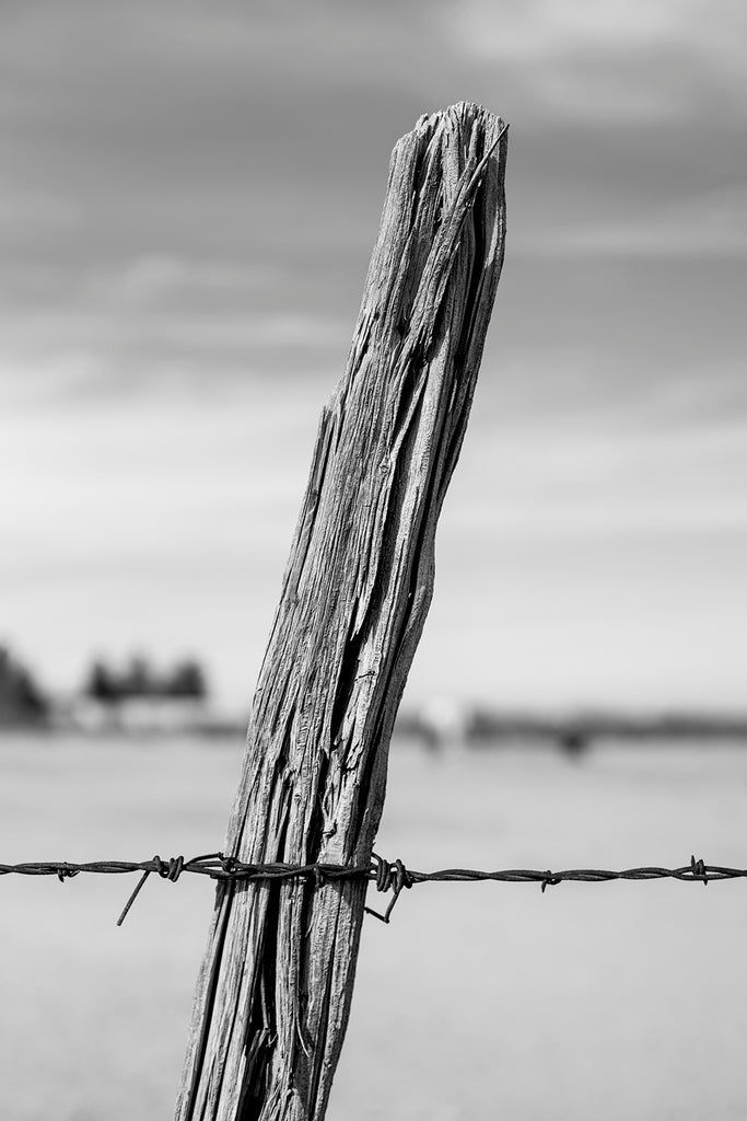 Black and white landscape photograph featuring a weathered old fence post with rusty barbed wire