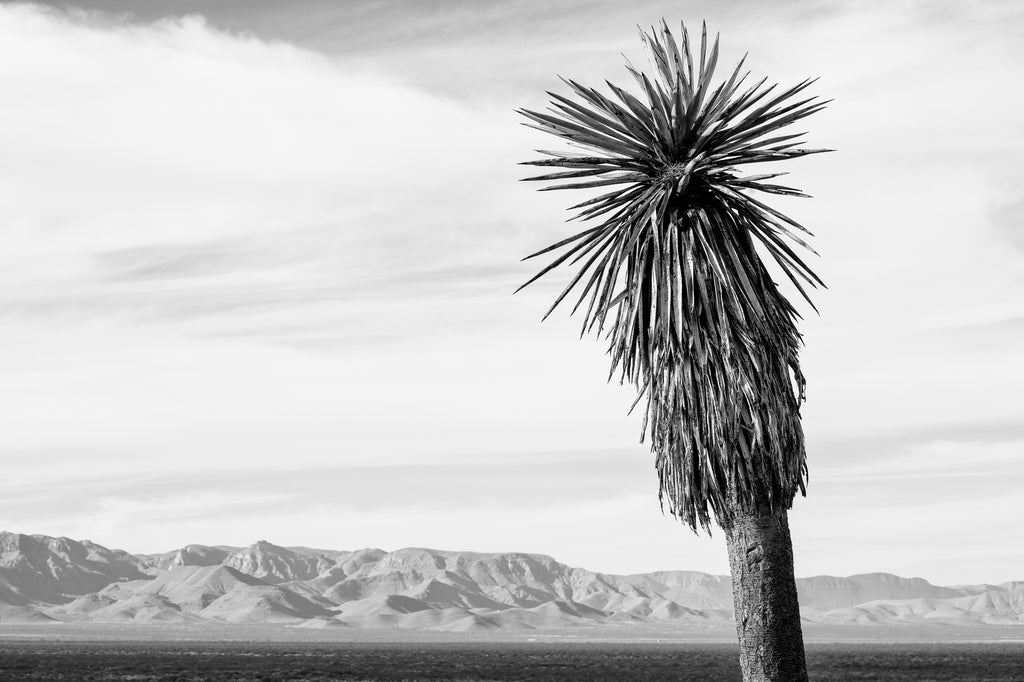 Black and white landscape photograph featuring a wide vista of the high desert and mountains of West Texas with a beautiful tall yucca in the foreground.