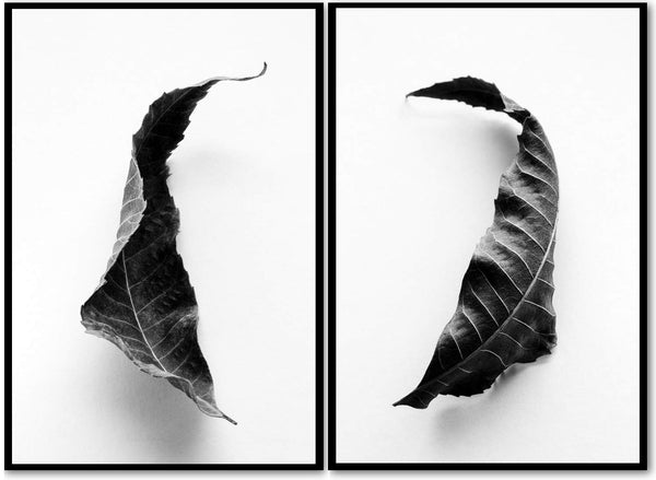 Set of two black and white fine art photographs of fallen leaves from a Black Walnut tree