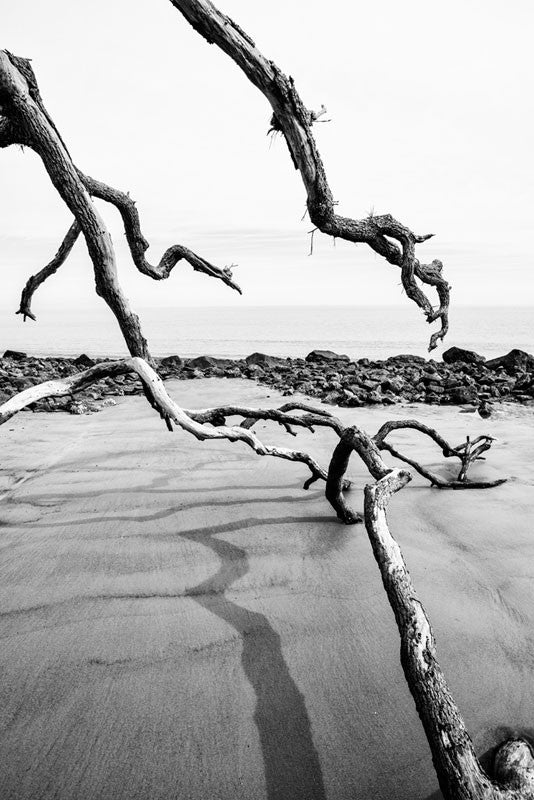 Black and white photograph of the Atlantic Ocean as seen from Driftwood Beach on Jekyll Island, Georgia.