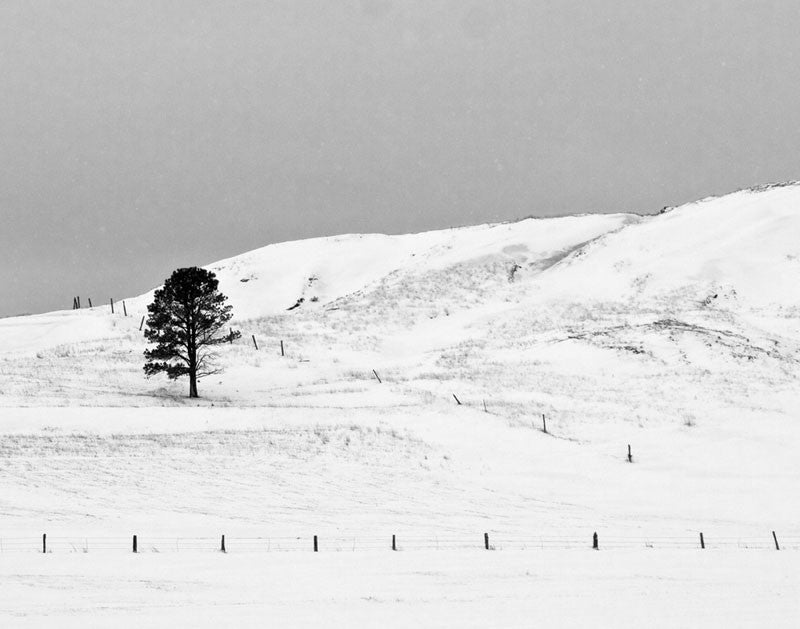 Black and white landscape photograph of a lone tree on a snow-covered Wyoming hillside.