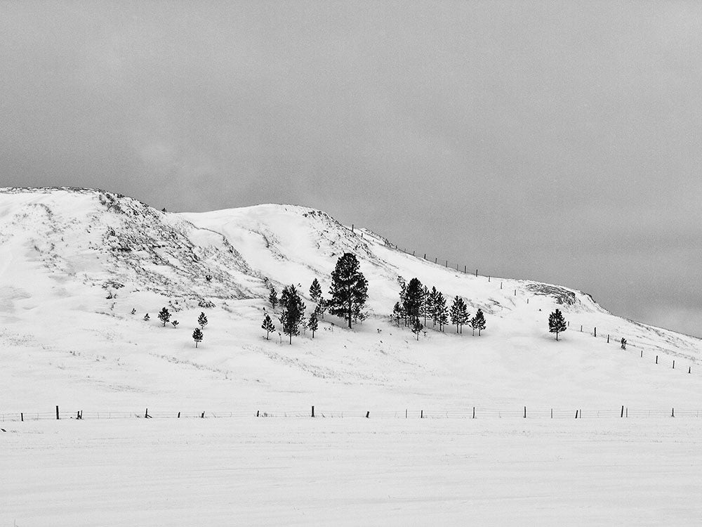Black and white landscape photograph of black trees on a steep, snow-covered hillside in Wyoming.