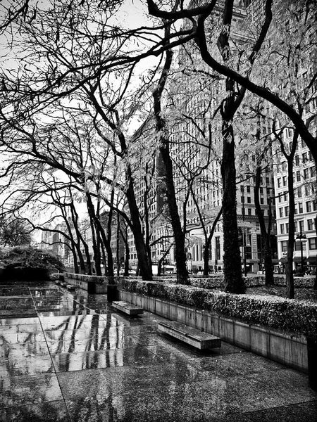 Black and white photograph of rain-soaked benches and trees on the plaza at the Art Institute of Chicago, along Michigan Avenue.