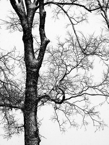 Black and white landscape photograph of a black, barren tree in winter.