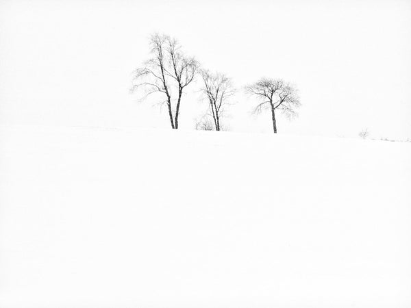Black and white landscape photograph of three trees in an active snowstorm on a stark white hillside