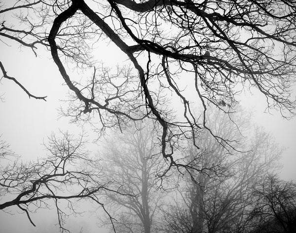 Black and white photograph of barren, black tree branches fading into a moody, foggy sky.