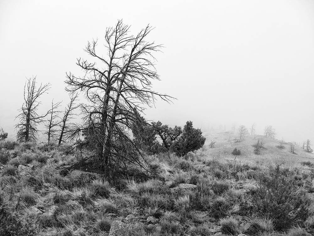Black and white winter landscape photograph of a hillside in Wyoming, with a snowfall just beginning.