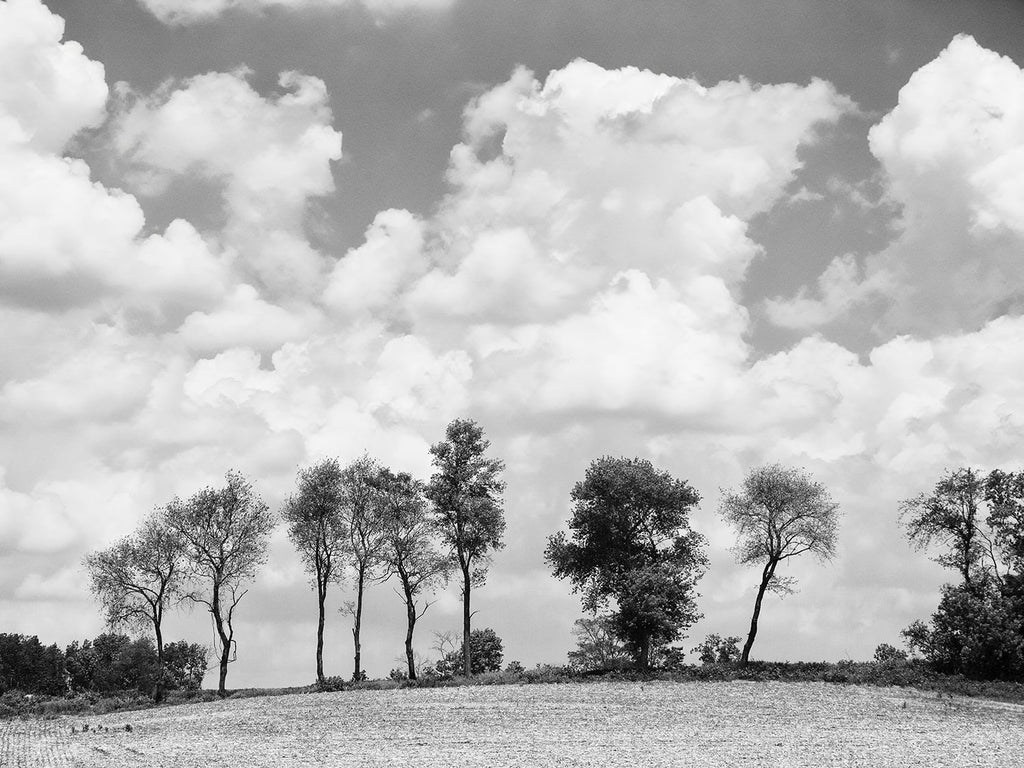 Black and white landscape photograph of a plowed field, with a row of barrier trees glistening in the sunshine, before a bank of beautiful tall clouds