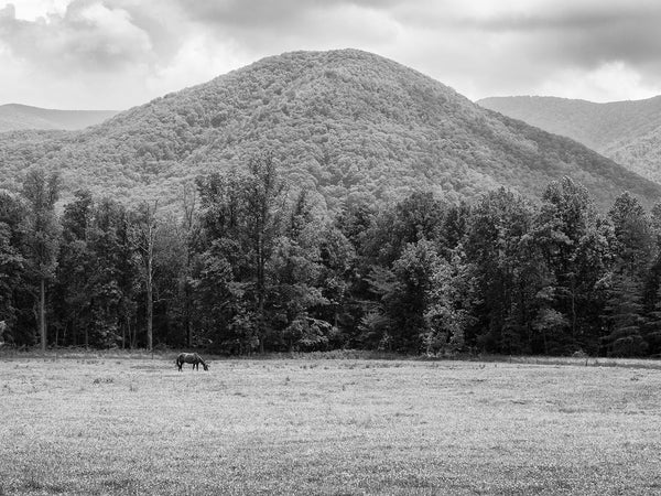 Black and white landscape photograph of a horse peacefully grazing in a lush pasture surrounded by forests and mountains.