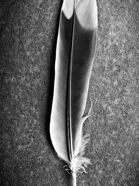 Black and white macro photograph of a white-tipped feather on a background of black slate.
