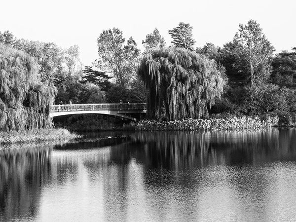Black and white photograph of a footbridge over a pond in Chicago's gorgeous Botanic Garden.