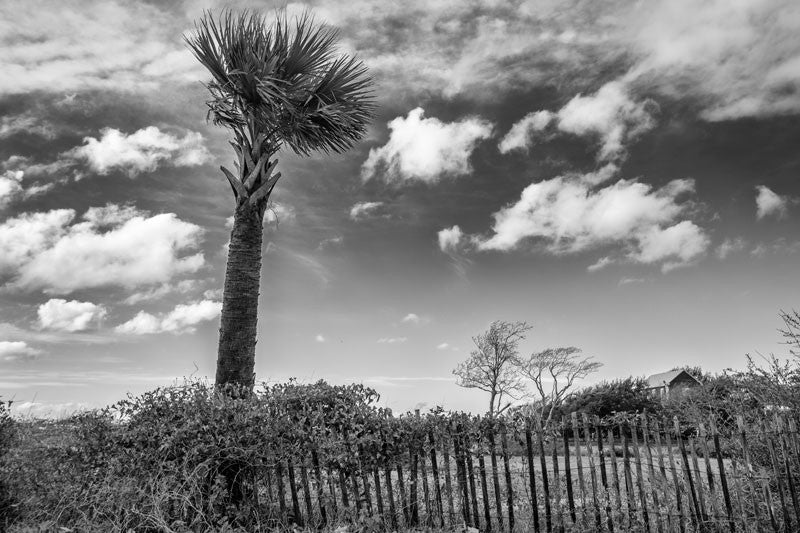 Black and white photograph of a palm tree and beach fence with clouds overhead at Sullivan Island in Charleston, South Carolina.