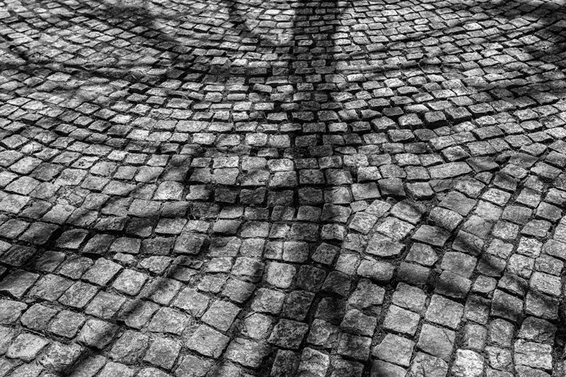 Black and white photograph of a tree shadow spread across a path of cobblestones in Nashville, Tennessee.
