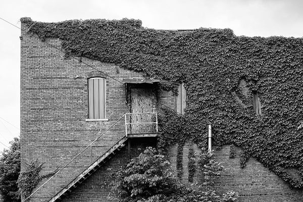 Black and white photograph of the ivy-covered side of the J.E. Winters Co. Dry Goods building, seen in the deserted downtown of Adams, Tennessee. Adams is famous as the home of the Bell witch legend.