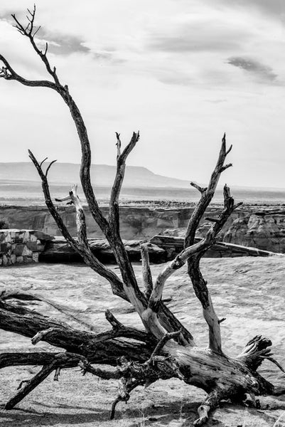 Black and white landscape photograph of Canyon de Chelly in Arizona, featuring a beautifully expressive fallen tree on the canyon rim.
