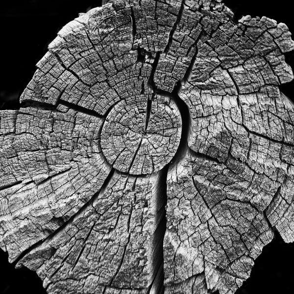 Black and white photograph of tree rings on a cracked and weathered old tree at Mesa Verde Cliff Dwellings in Colorado. The tree rings reminded me of a map of time, appropriate for a place that still holds the homes and artifacts of ancients who lived there a thousand years ago.