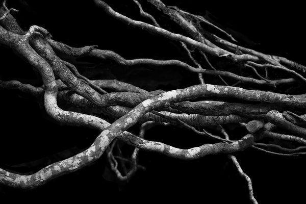 Black and white minimalist landscape photograph of tangled exposed tree roots on a black background.