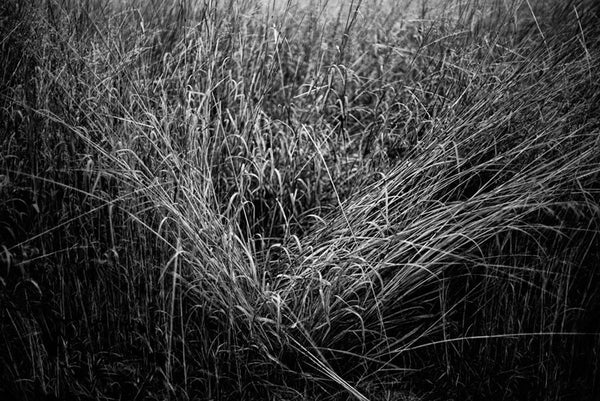 Black and white landscape photograph of grass naturally formed into a triangular shape. This intimate landscape photograph concentrates on texture, light, and composition over other more typical landscape elements.