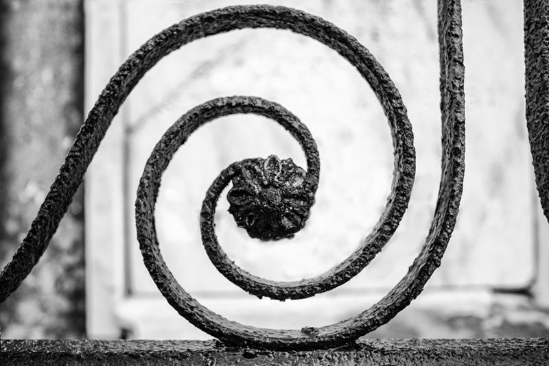 Black and white photograph of a rusty ornamental wrought iron fence in New Orleans, with a spiral design that centers on a small iron flower bloom.