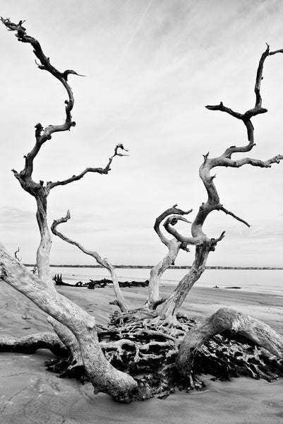 Black and white photograph of a tall, stunning dead tree projecting out of the sand at Driftwood Beach on Jekyll Island, Georgia.